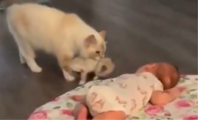 Bikin Gemas, Kucing Ini 'Perkenalkan' Bayinya dengan Bayi Manusia (55242)