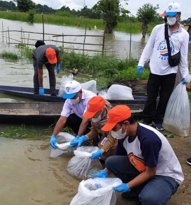 BKIPM Jambi Tebar 20.000 Benih Ikan Nilem di Danau Teluk Kenali (556605)
