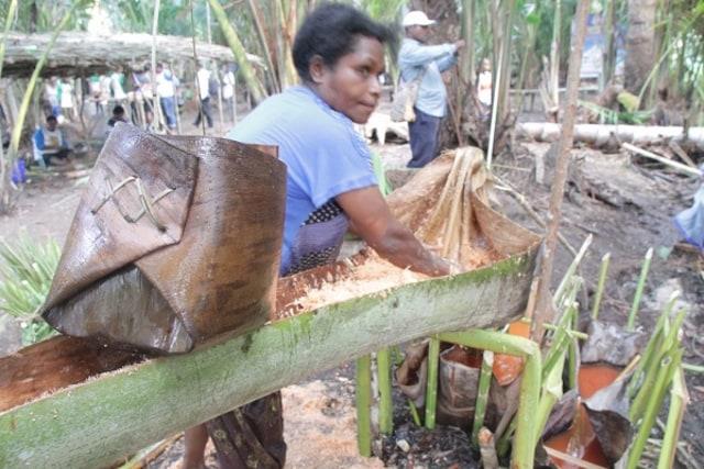 Pohon Sagu Sentani Terancam Punah (66538)