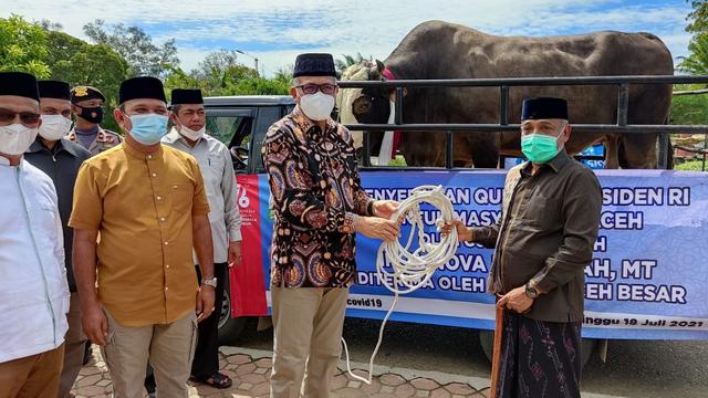 Sapi Kurban Jokowi untuk Warga Aceh Besar: Berat 1 Ton Lebih, Jenis Simental (993564)
