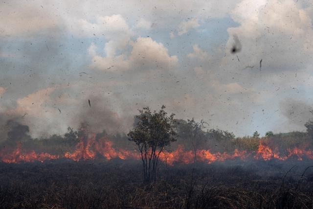 Foto: Lahan Seluas 15 Hektar Terbakar di Ogan Ilir (170989)
