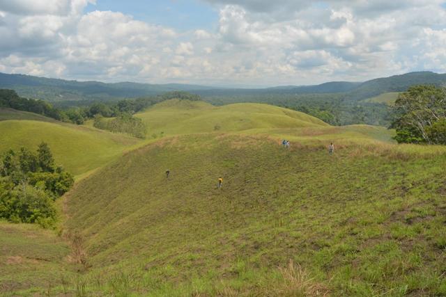 Fosil Kayu Berumur 15 Juta Tahun Ditemukan di Perbukitan Kampung Abar Jayapura (63134)