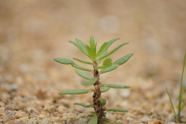 Struktur Sel Tumbuhan dan Fungsinya sebagai Penopang Hidup Tumbuhan (42826)