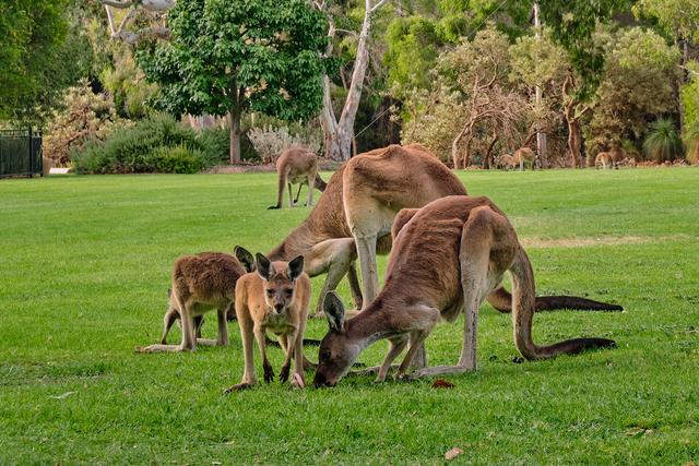 6 Destinasi Wisata Alam yang Wajib Dikunjungi Saat Traveling ke Australia Barat (39620)