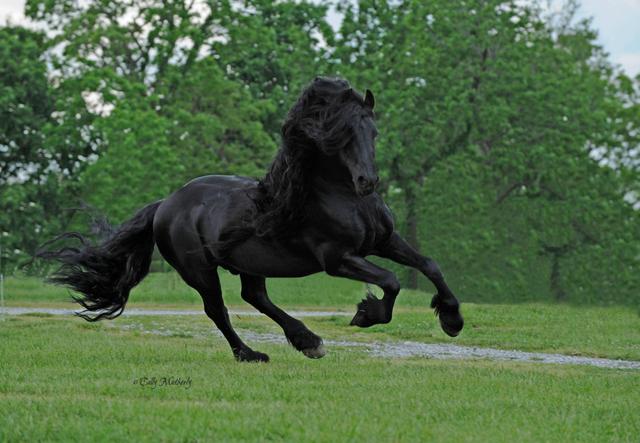 Ini Kuda Paling Ganteng di Dunia: Seksi dan Menawan (31360)