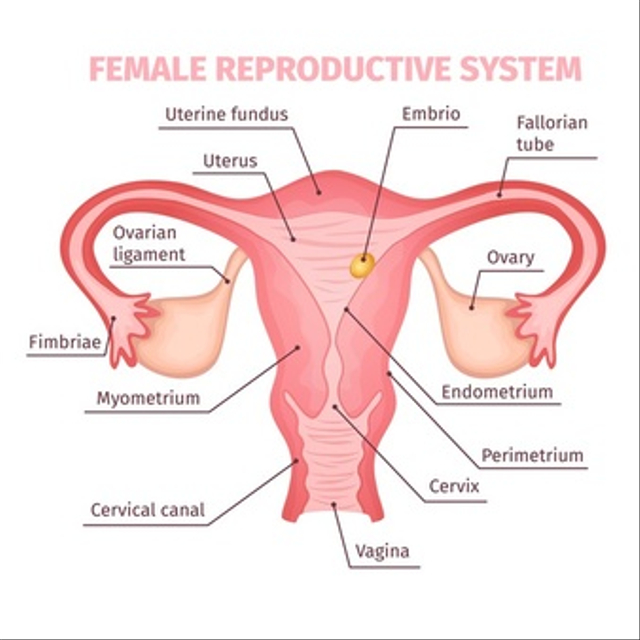 Fungsi Ovarium dan Organ Reproduksi Wanita Lainnya (56587)