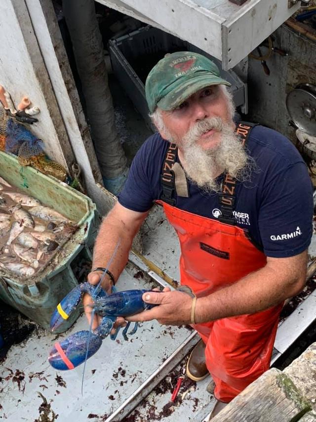 Nelayan Tangkap Lobster Biru Super Langka, Awalnya Dikira Ikan (200708)