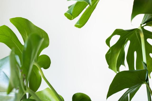 Mengenal Sel Tumbuhan dan Fungsinya (96107)