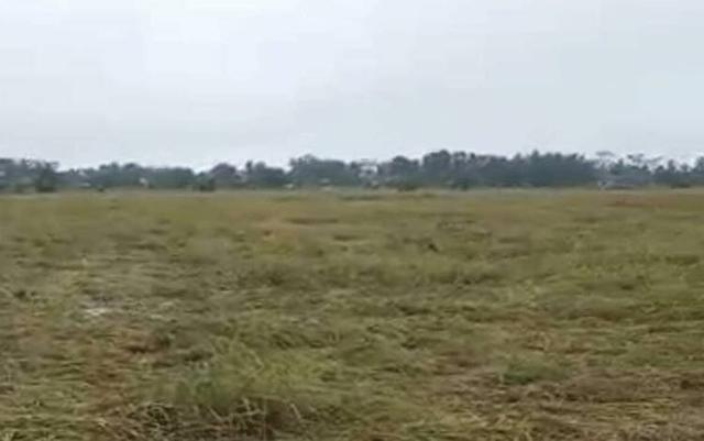 Lahan Pertanian di Lokasi Food Estate Pulang Pisau Diterjang Badai (60183)