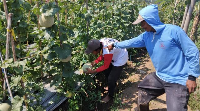 Tingkatkan Ekonomi Saat Pandemi, Petani di Tegal Ganti Tanaman Padi dengan Buah (792544)