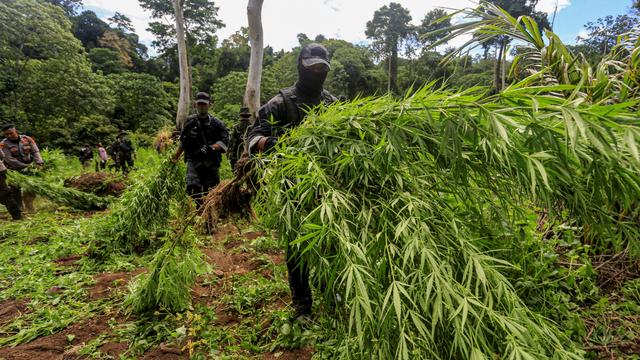 Foto: Memberantas 9 Hektar Ladang Ganja di Aceh (995934)