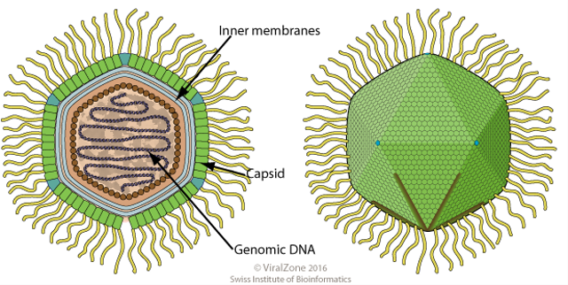 Virus Raksasa Ditemukan, Hidup di Tempat Terdalam Bumi (81384)