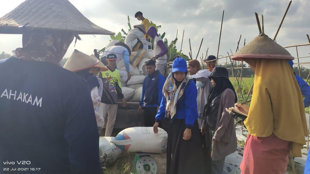 Untung Gede Jadi Buruh Angkut Padi di Siak, Seminggu Bisa Dapat Rp 5 Juta  (775976)