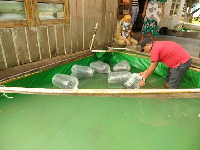 Dinas Perikanan Kotawaringin Barat Salurkan Bantuan 279.200 Bibit Ikan  (63657)