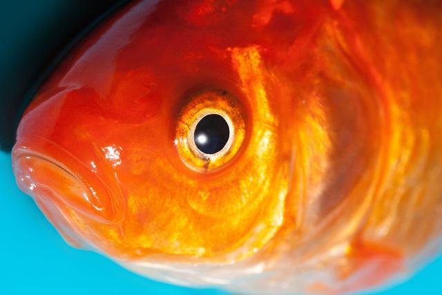 Mitos Ikan Mengedip di Waduk Darma Pertanda Bahaya (7989)