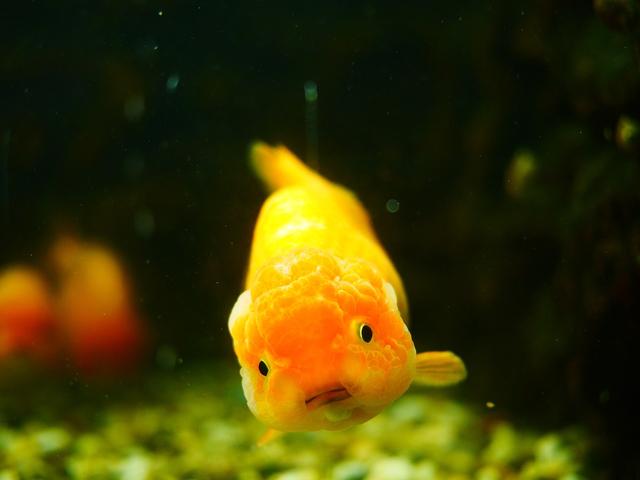 Mitos Ikan Mengedip di Waduk Darma Pertanda Bahaya (7991)