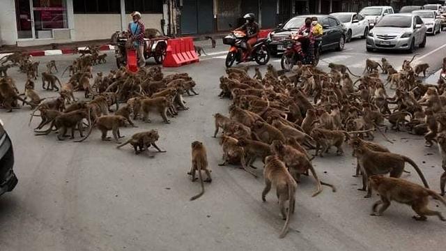 Heboh Geng Monyet Tawuran di Tengah Jalan, Ini Dugaan Penyebabnya (219501)