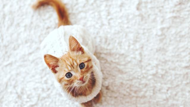 Pandemi Ternyata Juga Memengaruhi Kesehatan Mental Kucing Kamu, Ini Faktanya (7522)