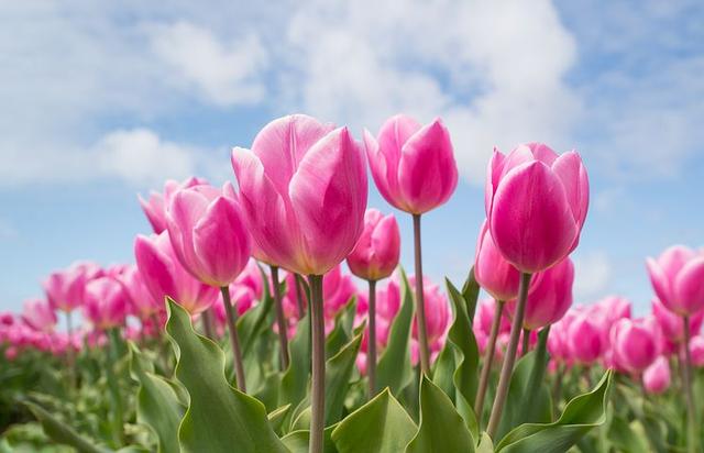 Bagian-bagian Bunga Sempurna: Mahkota Bunga hingga Alat Reproduksinya (229849)