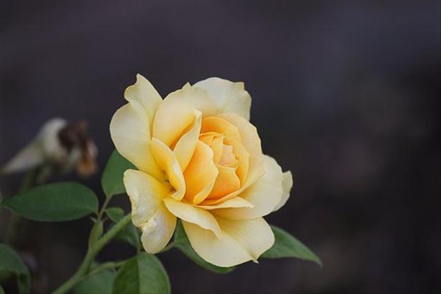 Bagian-bagian Bunga Sempurna: Mahkota Bunga hingga Alat Reproduksinya (229851)