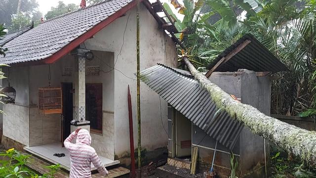 Pohon Tumbang Merusak 2 Rumah di Karangasem, Bali (987587)