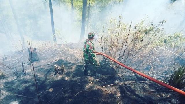 Diduga Sengaja Dibakar, 8 Hektare Hutan Pinus di Bener Meriah Hangus (461926)