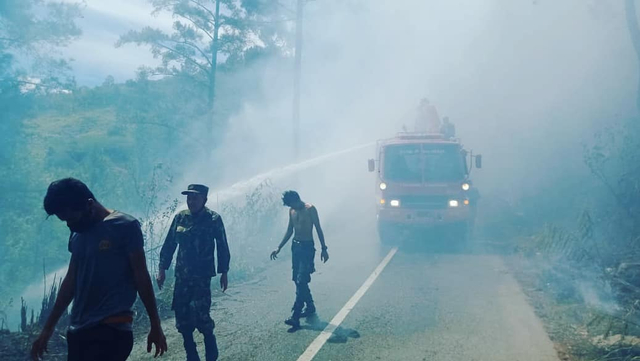 Diduga Sengaja Dibakar, 8 Hektare Hutan Pinus di Bener Meriah Hangus (461927)