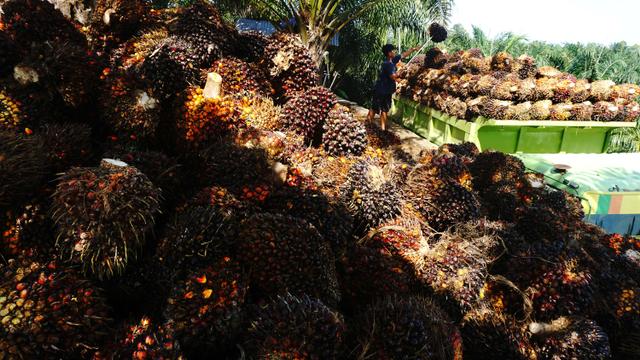 Populer: Gaji PNS DKI Puluhan Juta, Sri Lanka Diminta Cabut Larangan Impor Sawit (22434)