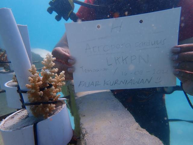 Foto: Aksi Menjaga Ekosistem Karang dan Kibarkan Merah Putih di Laut Anambas (286915)