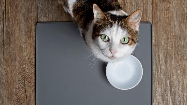 Pandemi Ternyata Juga Memengaruhi Kesehatan Mental Kucing Kamu, Ini Faktanya (7523)