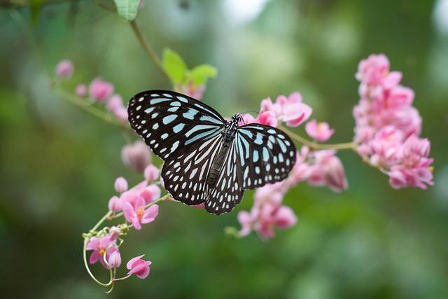 Kenali 3 Manfaat Kupu-Kupu yang Baik untuk Lingkungan (144713)