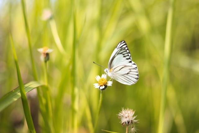 Kenali 3 Manfaat Kupu-Kupu yang Baik untuk Lingkungan (144715)