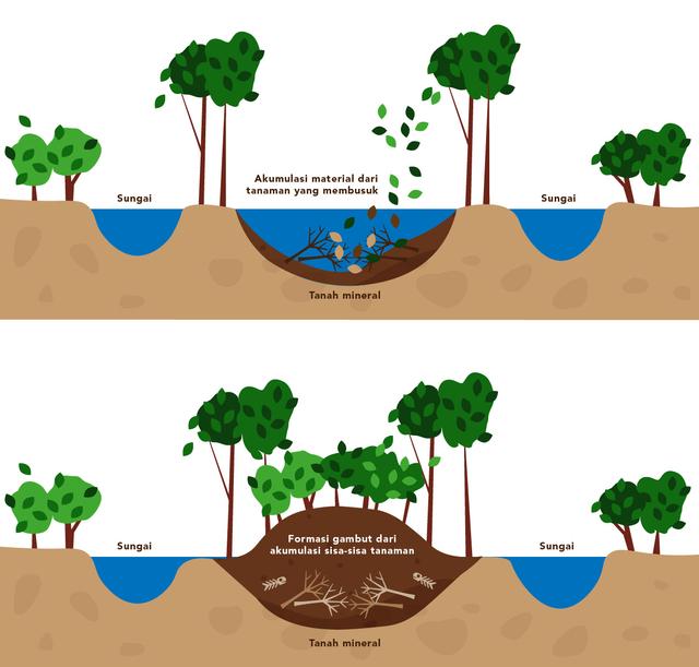 Mencegah Perubahan Iklim Melalui Konservasi Lahan Gambut