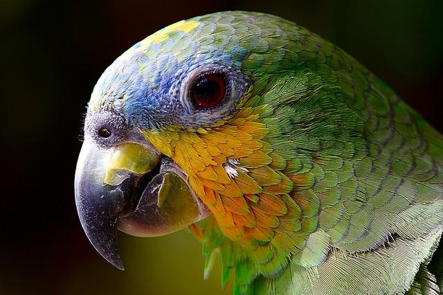 Sistem Peredaran Darah pada Burung: Jantung hingga Paru-Paru (70777)