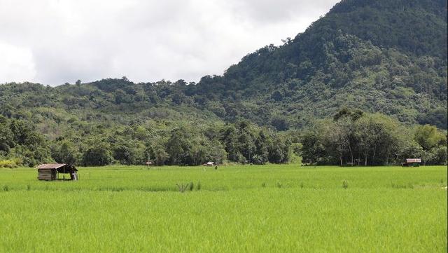 Food Estate adalah Keniscayaan Bagi Negara Agraris (336749)