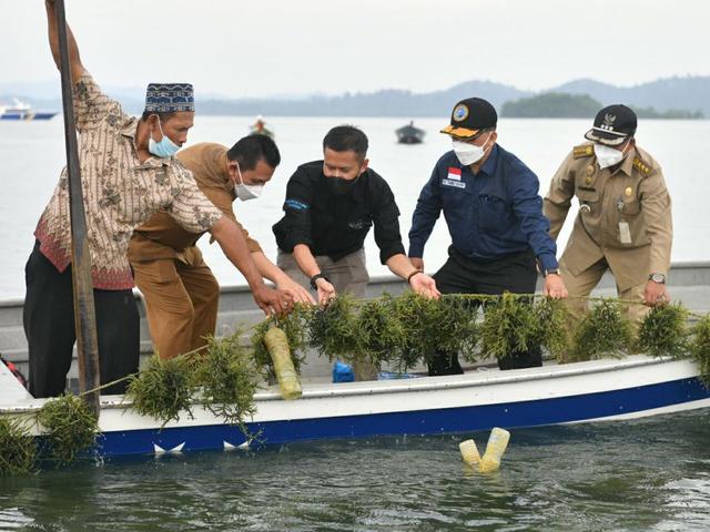Pemprov Kepri Dorong Pengembangan Budidaya Rumput di Pulau Moro, Karimun (7393)