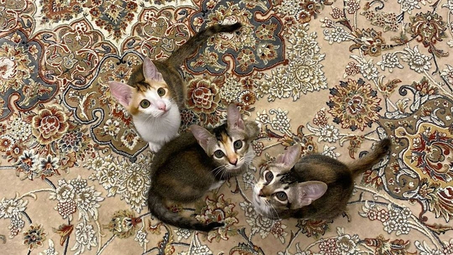 5 Berita Populer: Lapas di Tangerang Terbakar hingga 3 Kucing Baru Prabowo (21861)