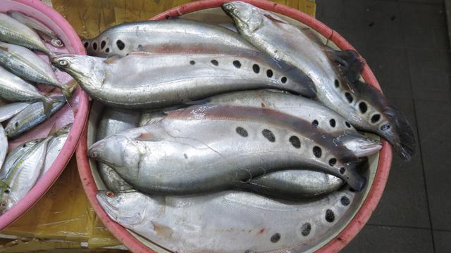 Mengenal Ikan Belida yang Terancam Punah, Bahan Utama Kerupuk sampai Pempek (54987)