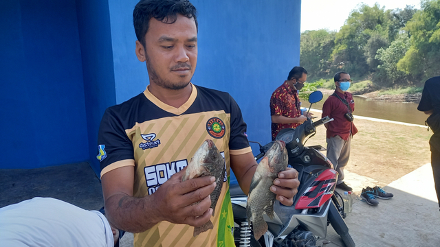 Tercemar Limbah Ciu, Ikan di Bengawan Solo 'Mabuk' (20662)