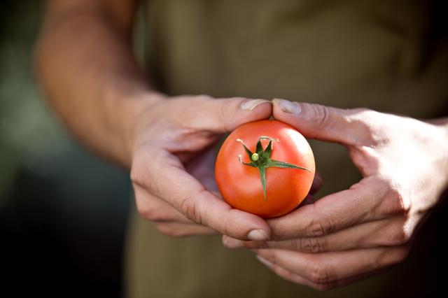 Rutin Makan Tomat Bisa Tingkatkan Kualitas Sperma, Mitos atau Fakta? (544720)