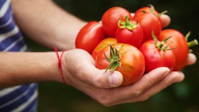 Rutin Makan Tomat Bisa Tingkatkan Kualitas Sperma, Mitos atau Fakta? (544719)