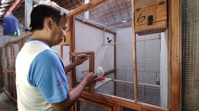 Cerita Peternak Burung Murai Batu di Blora, Tak Goyah Diterpa Pandemi COVID-19 (240370)