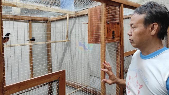 Cerita Peternak Burung Murai Batu di Blora, Tak Goyah Diterpa Pandemi COVID-19 (240371)