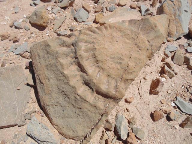 Ilmuwan Temukan Fosil 'Naga Terbang', Pernah Hidup di Negara Ini (107052)