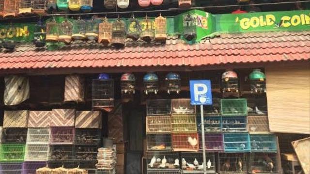 Terungkap, 5 Pasar Penjual Burung Dilindungi Terbesar di Indonesia (404562)