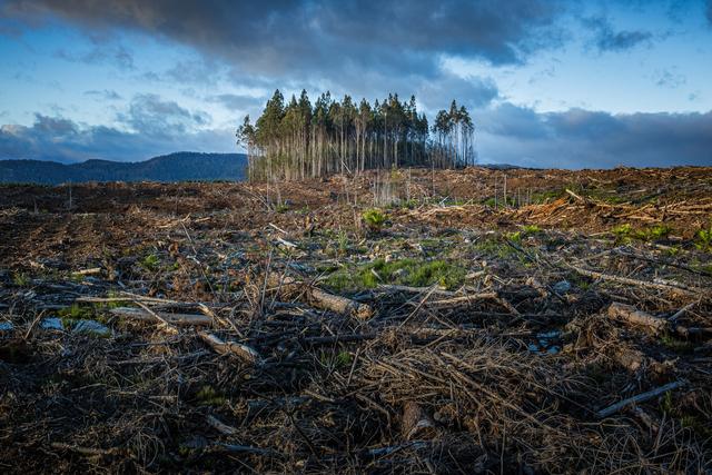 Mengapa Pemanasan Global Dapat Menyebabkan Kepunahan Spesies? (1228836)