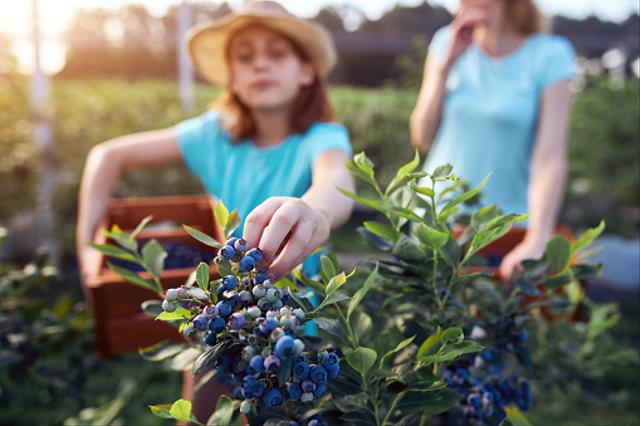 6 Contoh Hak Kita terhadap Lingkungan Hidup (648453)