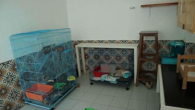 Melihat Rumah Arbani Yasiz yang Tampak Nyaman, Ada Ruangan Khusus Kucing (73125)