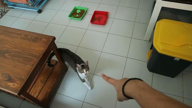Melihat Rumah Arbani Yasiz yang Tampak Nyaman, Ada Ruangan Khusus Kucing (73126)