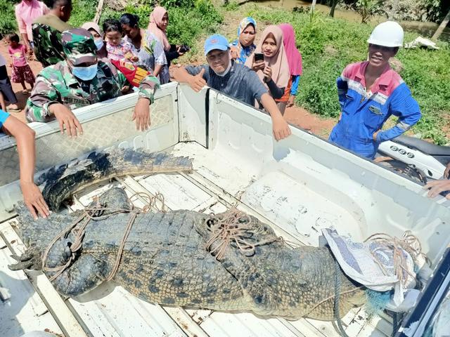 Seekor Buaya Sepanjang 4 Meter Ditemukan Tidak Jauh dari Penangkaran di Jambi (107540)